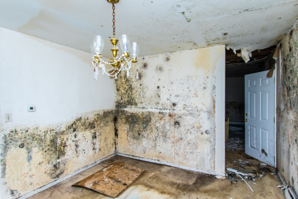 Mold Damage In Living Room